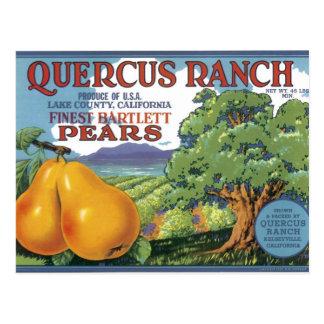 Peras de bartlett del rancho del quercus tarjeta postal