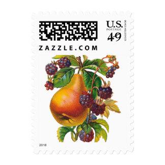 Peras del vintage y frutas de las frambuesas sellos