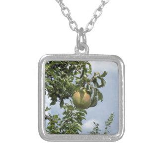 Peras en ramas de árbol colgante cuadrado