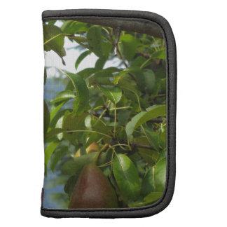 Peras rojas en ramas de árbol planificador