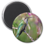 Perca del colibrí II Imán Redondo 5 Cm