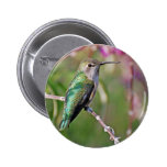 Perca del colibrí II Pins