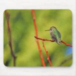 Perca del colibrí III Alfombrillas De Ratones