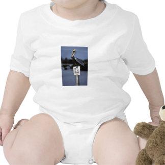 Percas del pelícano de Brown en muestra del Traje De Bebé