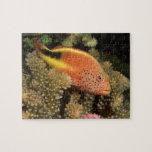 Percas pecosas de los hawkfish en corales pedregos puzzle