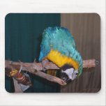 Perch Chewing Macaw Mouse Pads
