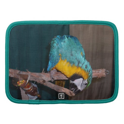 Perch Chewing Macaw Organizers