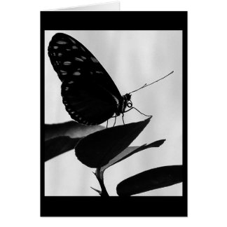 perched ~ 2009 butterfly series ~ note card
