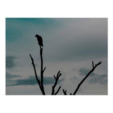 USA Themed Perched Bird Silhouette Postcard (Florida)