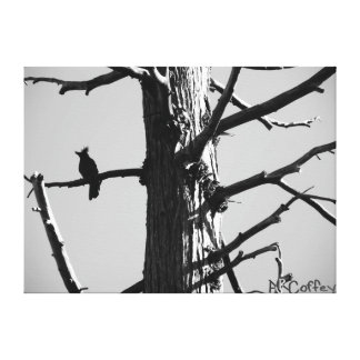 Perched Stretched Canvas Prints