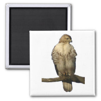 Perched Hawk 2 Inch Square Magnet