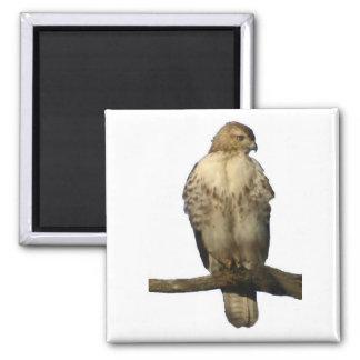 Perched Hawk Magnet