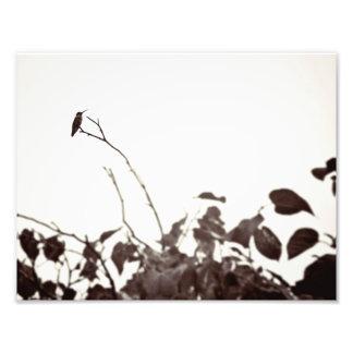 Perched Hummingbird 11x8.5 Photo