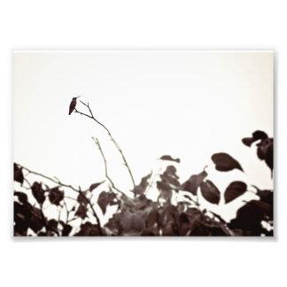Perched Hummingbird 7x5 Photo