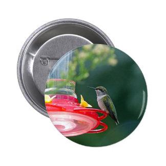 Perched Hummingbird Pinback Button