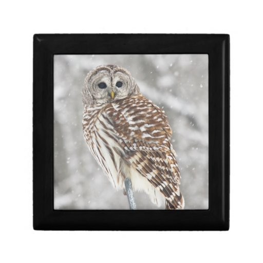 Perched Owl - Gift Box