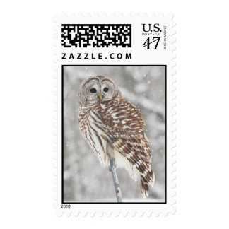 Perched Owl - Stamp