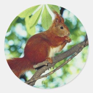 Perched Red Squirrel Round Sticker