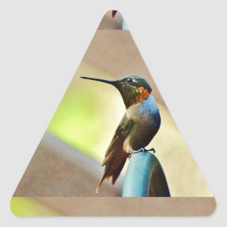 Perched Ruby and Green  little Hummingbird Triangle Sticker