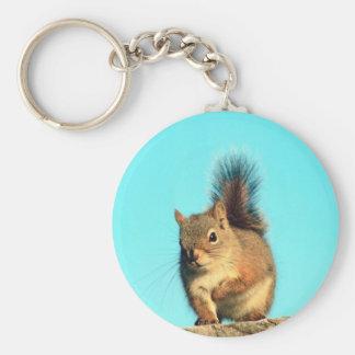 Perched Squirrel Basic Round Button Keychain