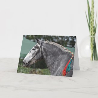 percheron draft horse photo card