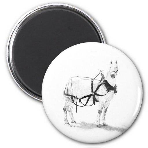 Percheron Draft Horse Equine Art Magnets