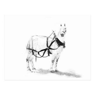 Percheron Draft Horse Equine Art Postcard