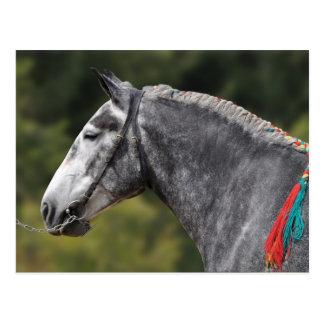 Percheron draft horse mare postcard
