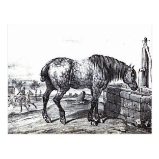 Percheron Horse Vintage Drawing Art Postcard