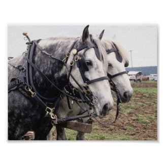 Percheron Poster