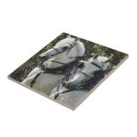Percheron Team Ceramic Tiles