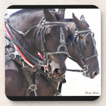 Percheron Team Coasters