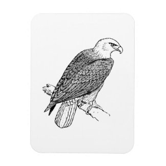 Perching American Bald Eagle Illustration Magnets