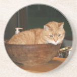 Percy the cat in bowl beverage coasters