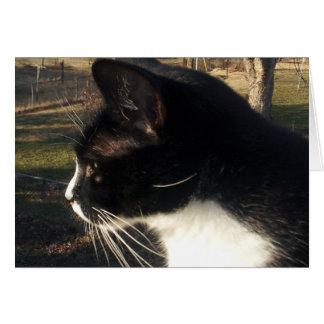 Pérdida de mascota del gato de A Tarjeta De Felicitación