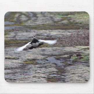 Perdiz nival de la roca de Evermann en vuelo Mousepad