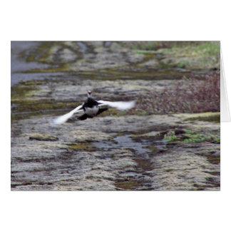Perdiz nival de la roca de Evermann en vuelo Tarjeta De Felicitación