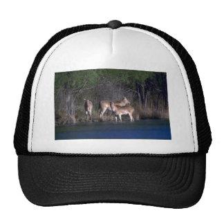 Pere David's Deer-group of females Trucker Hat