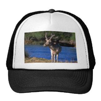 Pere David's Deer-stag in velvet Trucker Hat