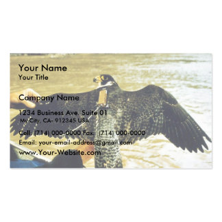 Peregrine Business Card Template