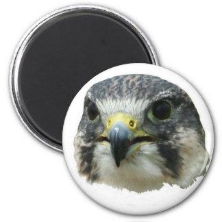 Peregrine Falcon 2 Inch Round Magnet
