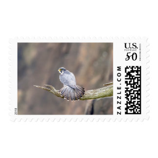 Peregrine Falcon at the Palisades Interstate Park Postage