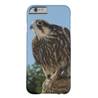 Peregrine Falcon Barely There iPhone 6 Case