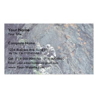 Peregrine falcon business card template