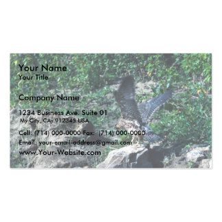 Peregrine Falcon Business Cards