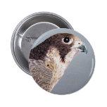 Peregrine Falcon Button 2 Inch Round Button