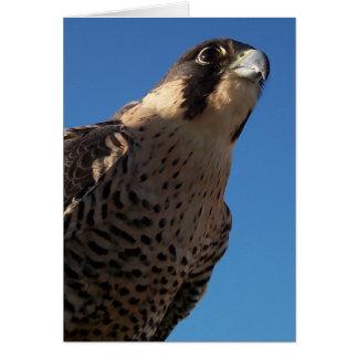 Peregrine Falcon Cards