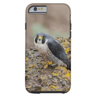 Peregrine falcon tough iPhone 6 case