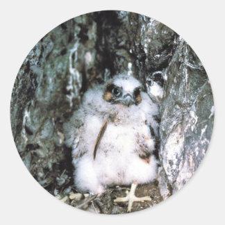 Peregrine Falcon Chick Classic Round Sticker