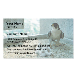 Peregrine Falcon Chicks, Female Business Card